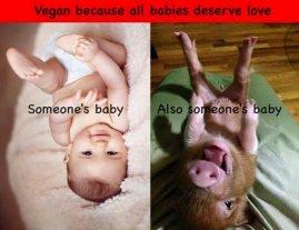 Vegan - someone's babies