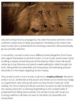 Lions - Poster for canned hunting 18