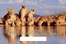 Lions - Trophy hunting 29