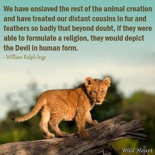 Lions - We have enslaved the animal creation