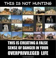 Trophy hunters - Revenge hunting not but false sense of danger