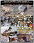 Trophy hunters - Traps Bloodthirsty people