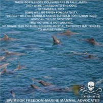 29 Oceans and rivers - Dolphins slaughtered