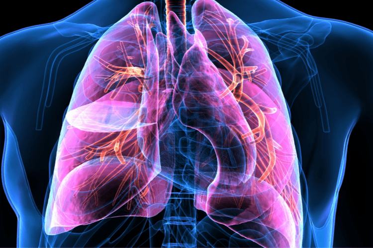 A digital figure of the lungs in a body |What Happens at a Pulmonary Clearance for Bariatric Surgery | Breathe Out