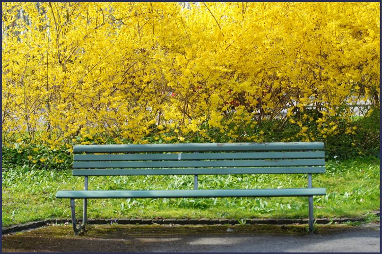 A tree in a park with yellow-flowered bushes behind it. | There's Room Here on the Loser's Bench For You! | Welcome Aboard! | Graphic | Stop Weighting, Start Doing, weight loss, bariatric surgery, loser bench