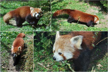 2010_04_11_zoo_de_Beauval20