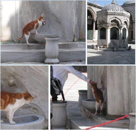Istanbul___Chat_de_la_Mosqu_e_neuve