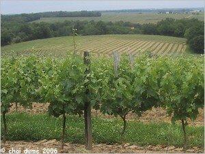 vigne_de_boniveau
