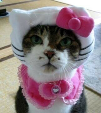 Chat_d_quis__en_Hello_Kitty