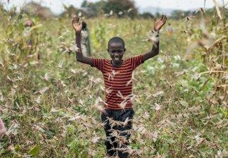 Africa's triple dilemma: Locusts, COVID-19, flooding