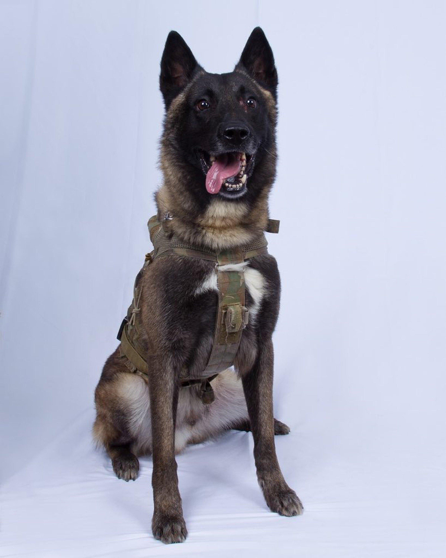 Military dog hurt in al-Baghdadi raid is K-9 combat veteran