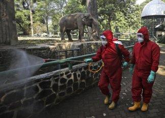 Latest global report on the coronavirus pandemic plague outbreak