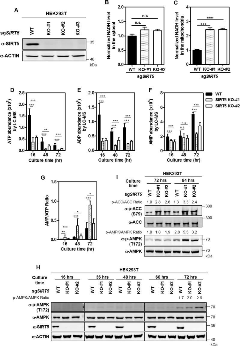 Human Embryonic Kidney 293t Hek293t Cells Cells Obtained