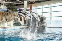 Chicago Shedd Aquarium Tickets