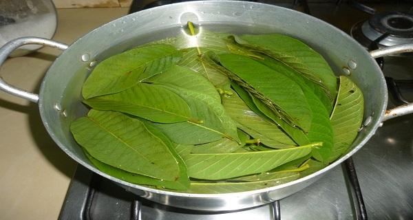 Image result wey dey for Guava leaf mouthwash