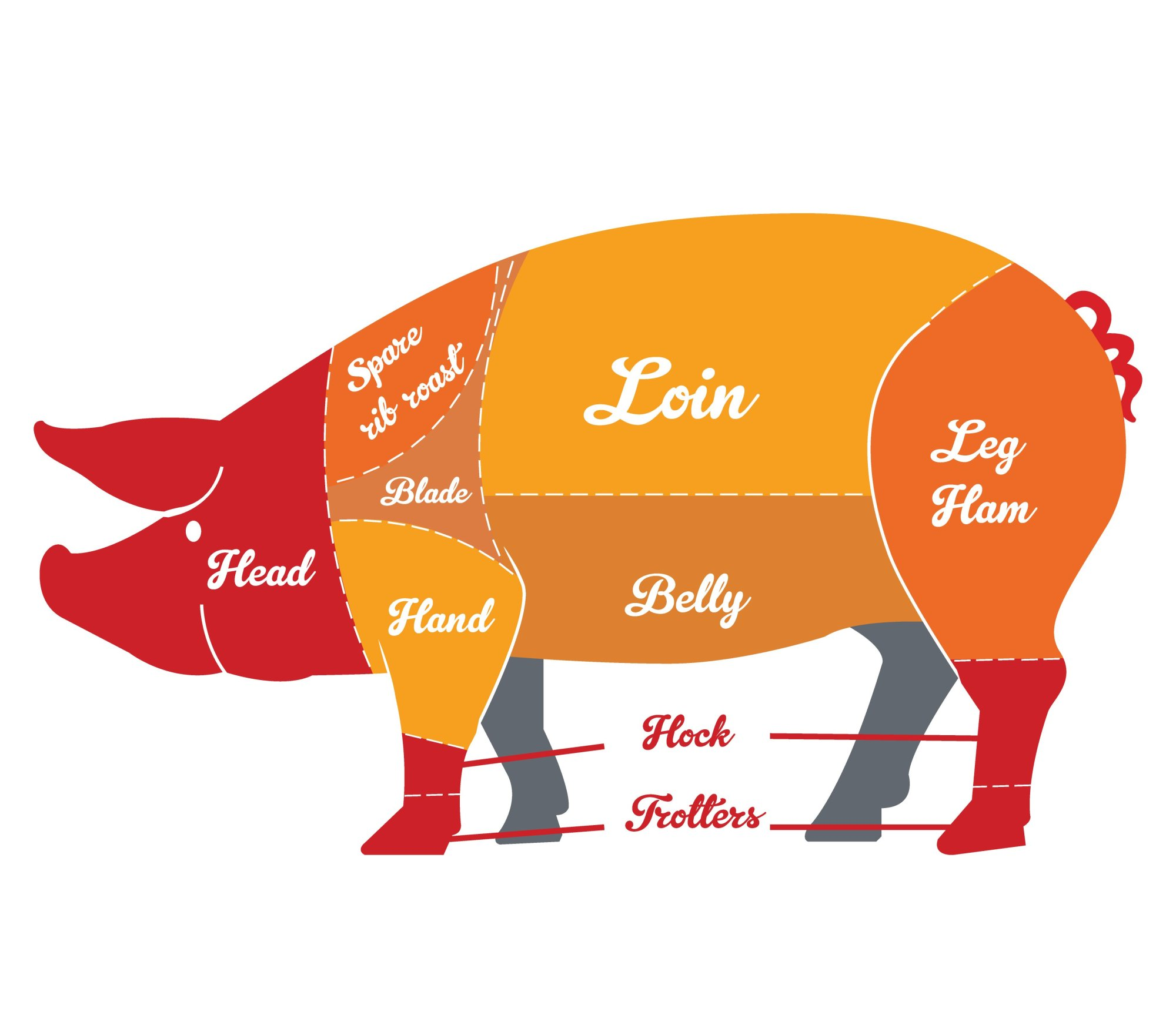 hight resolution of ham bone diagram