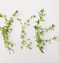 rosemary herb diagram [ 2312 x 1535 Pixel ]