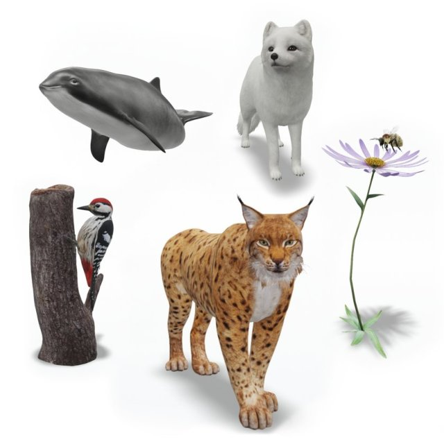 An image of augmented reality animals: a porpoise, a woodpecker, a lynx, an arctic fox and a flower with a bee