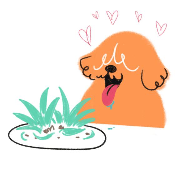 Dog eat grass