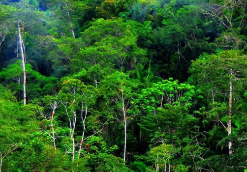 6 Ciri Ciri Hutan Hujan Tropis di Indonesia dan