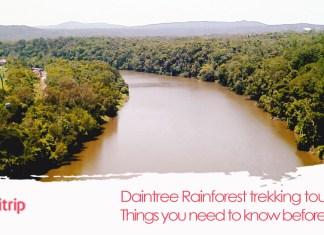 daintree rainforrest