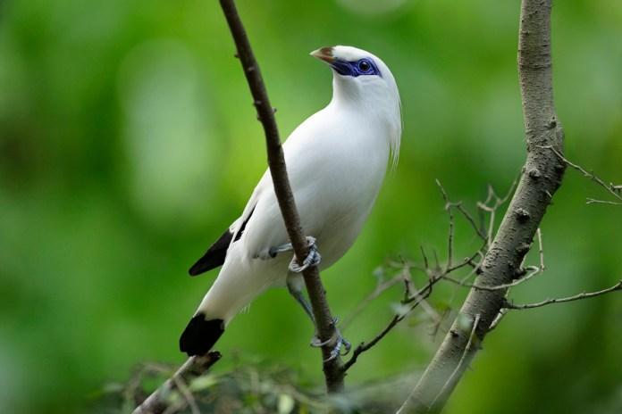 Jurong Bird Park houses many threaten Asian birds