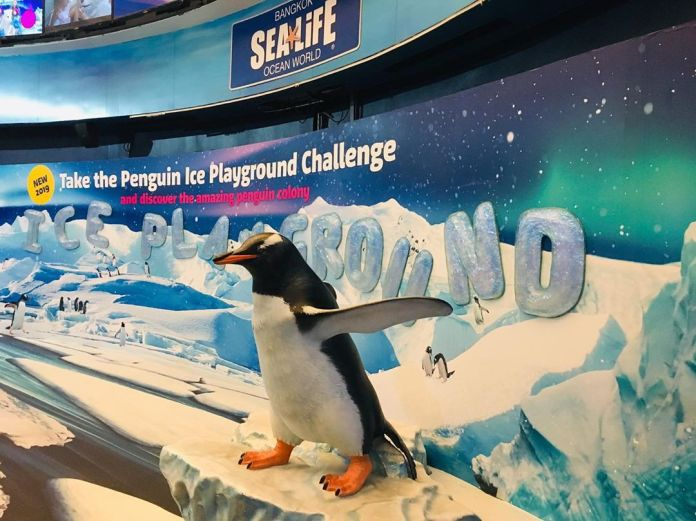 Penguin Ice Adventure in Sea Life Bangkok
