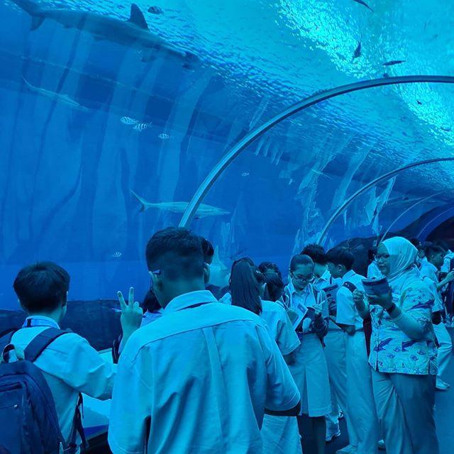 Students visit S.E.A Aquarium
