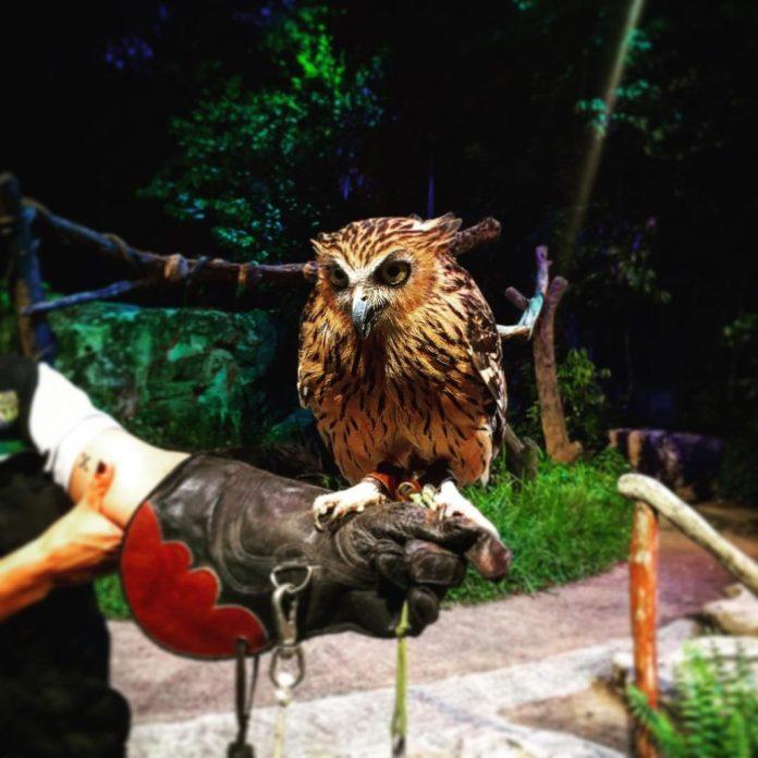 Động vật trong Night Safari Singapore