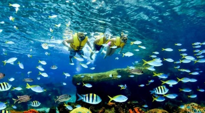 Hoặc ngắm nhìn thế giới đại dương sống động