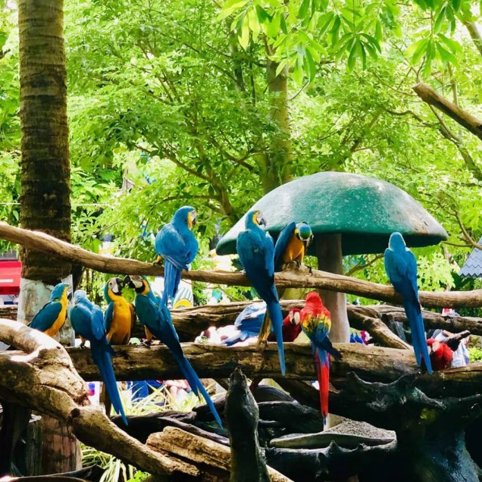 vườn thú Safari World Bangkok