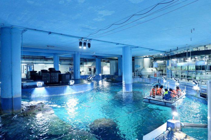 Hoạt động cho cá ăn ở Sea Life Bangkok Ocean World