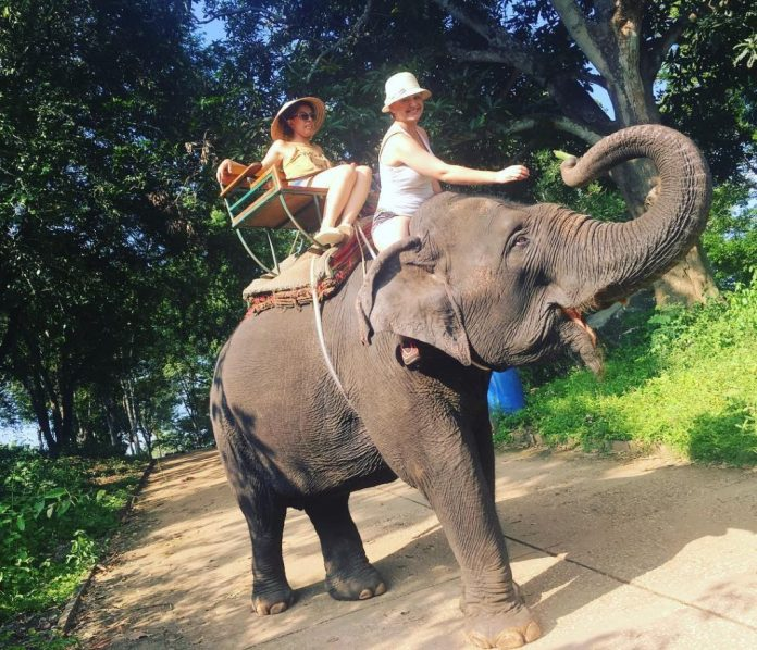 trại voi taweechai elephant camp