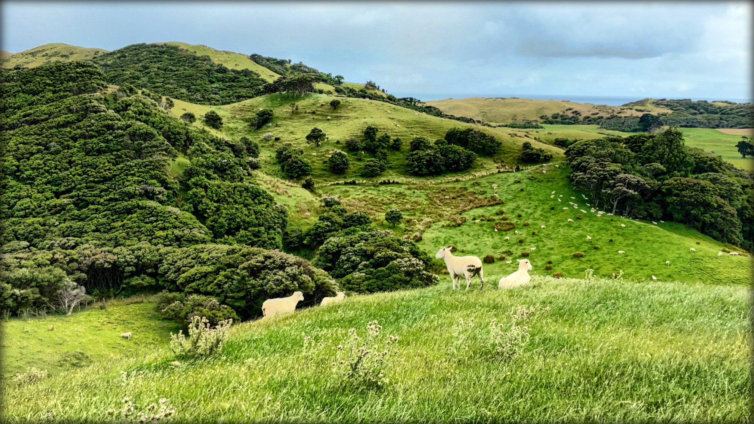 Farewell Spit, New Zealand