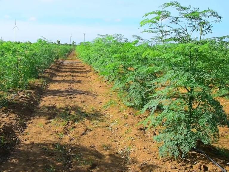 Munga Farming