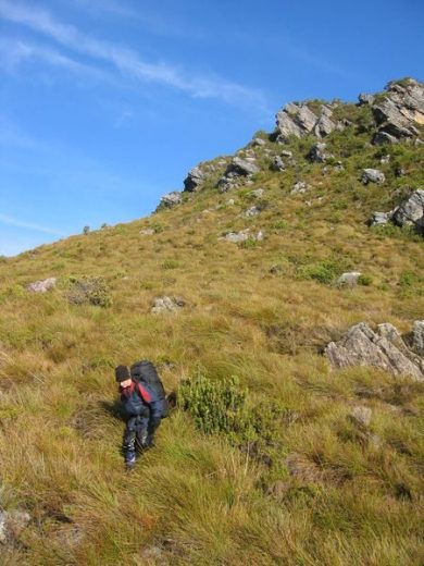 A walker descends the buttongrass-covered ridgeline of Sentinels Ridge, in the Southwestern Tasmanian Wilderness