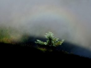 A Brocken Spectre, spotted looking downwards and eastwards in eveningtime, from the summit of Saddle Mountain, Oregon, USA