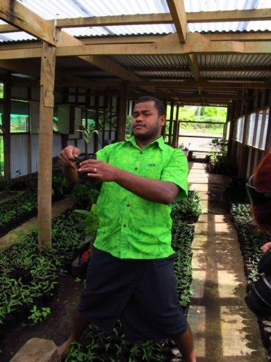 On the trail of the Big Dakua Tree. At Colo-I-Suva Forest Park, Suva, the Capital, Viti Levu, (Main Island) Fiji