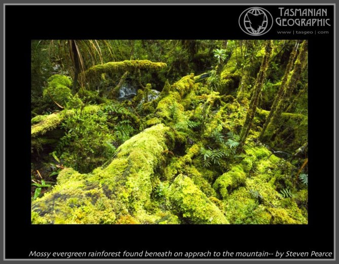 Mossy evergreen rainforest found beneath on apprach to the mountain-- by Steven Pearce
