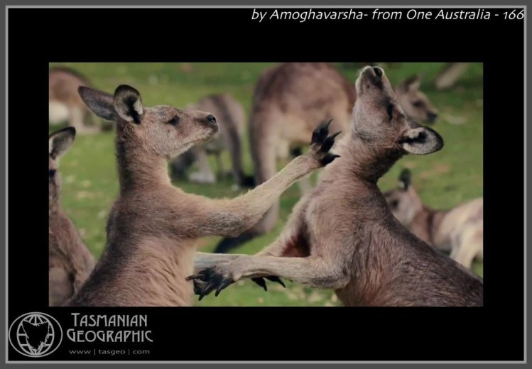 by Amoghavarsha- from One Australia - 166