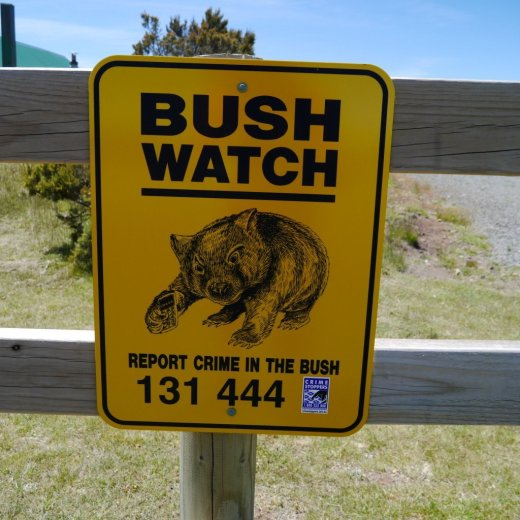 Keep an eye out for wombats