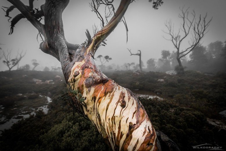 Tree of Faces - Copyright by Ben Wilkinson - Wilkography