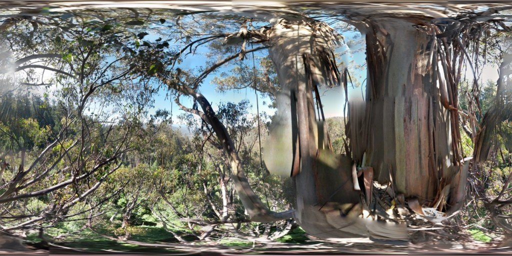ClimbingTheTallestFloweringTree_byYD BarNess_TasmanianGeographic___Photosphere_B Lower Crown_1200px