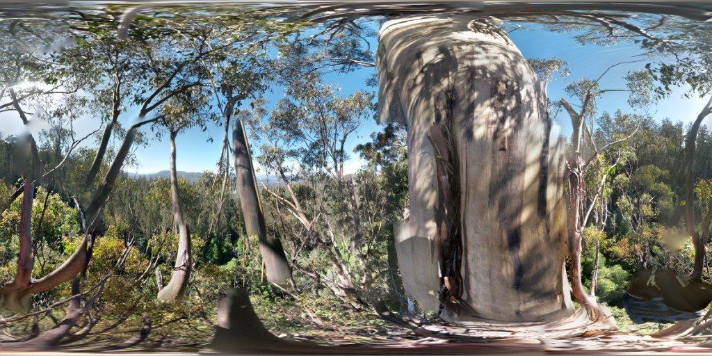 ClimbingTheTallestFloweringTree_byYD BarNess_TasmanianGeographic___Photosphere_C Mid Crown_1200px