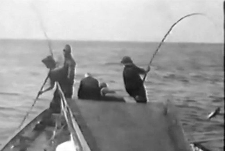 Living with and caring for the D Entrecasteaux Channel - ScreenCap - by Sheltered Passage - 022