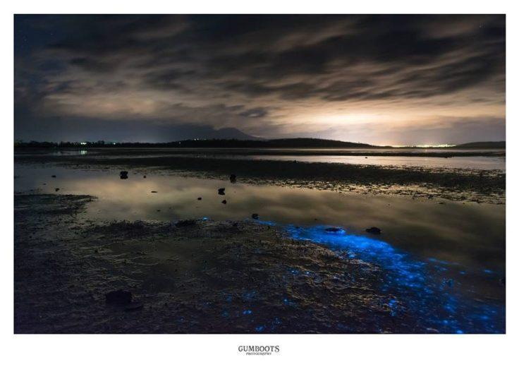 Sea Sparkle -5- by Fiona Walsh