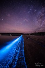 South Arm Bioluminence - by Matthew Holz