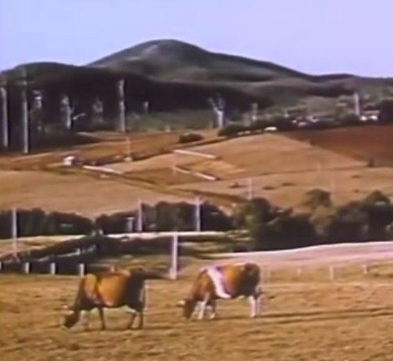 A Tasmanian Story (1954) - Via State Library 46