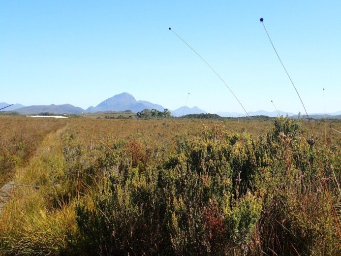 The buttongrass at Melaleuca - by Nicole Gill
