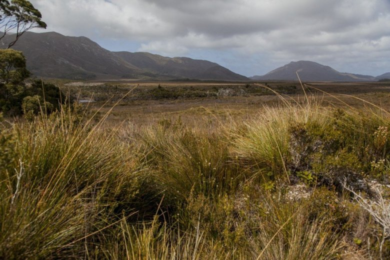 Flying Into The South Coast Track - Buttongrass near Melaleuca airstrip - by Geraldina Dijkstra
